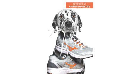 Doggie Dash Fun Run